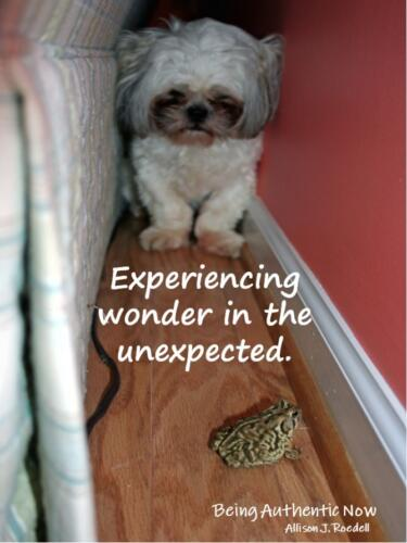Wonder in the Unexpected